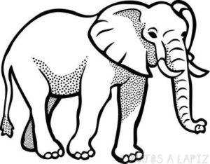dibujos de elefantes faciles