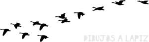 dibujos de gansos para colorear