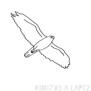 dibujos de halcones a lapiz