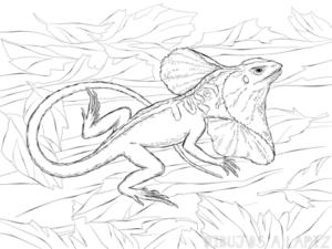 dibujos de lagartijas para colorear