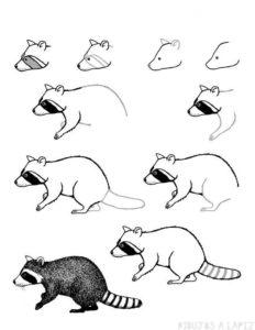 dibujos de mapaches para colorear