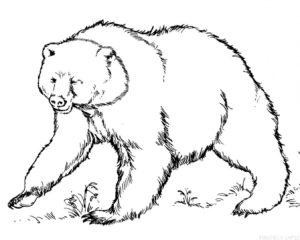 dibujos de osos polares