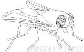 dibujos infantiles de insectos