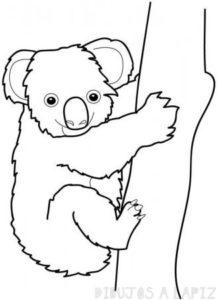 dibujos koala mofli