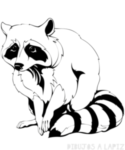 dibujos para colorear de mapaches