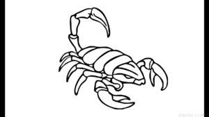 escorpion en dibujo