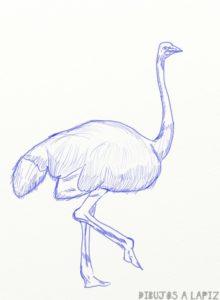 figuras de avestruz