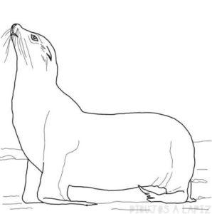 foca en caricatura
