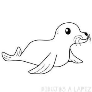 focas marinas