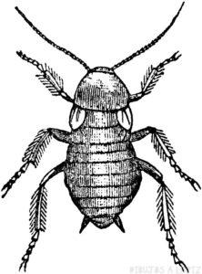 foto cucaracha