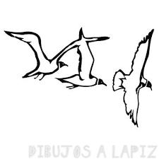 fotos de gaviotas volando