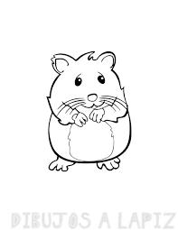 fotos de hamster bonitos