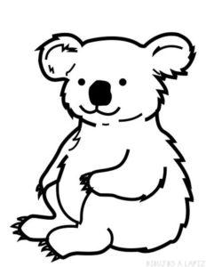 fotos de koalas graciosos
