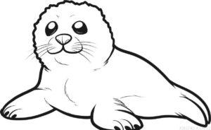 fotos focas