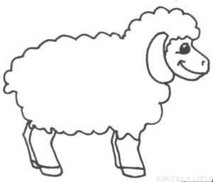 fotos ovejas