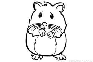 gif hamster