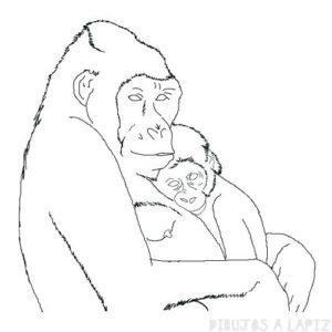 gorila para niños