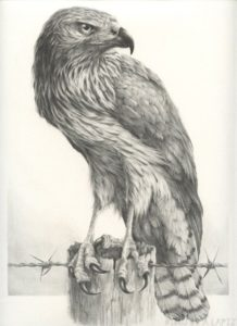 halcon animado