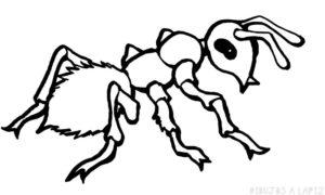hormiga dibujo para colorear