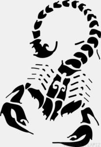 imagenes de alacranes y escorpiones