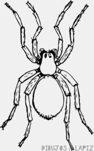 imagenes de arañas para colorear
