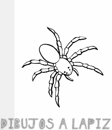 imagenes de arañas para dibujar