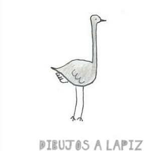 imagenes de avestruz