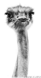 imagenes de avestruz animadas