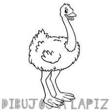 imagenes de avestruz para imprimir