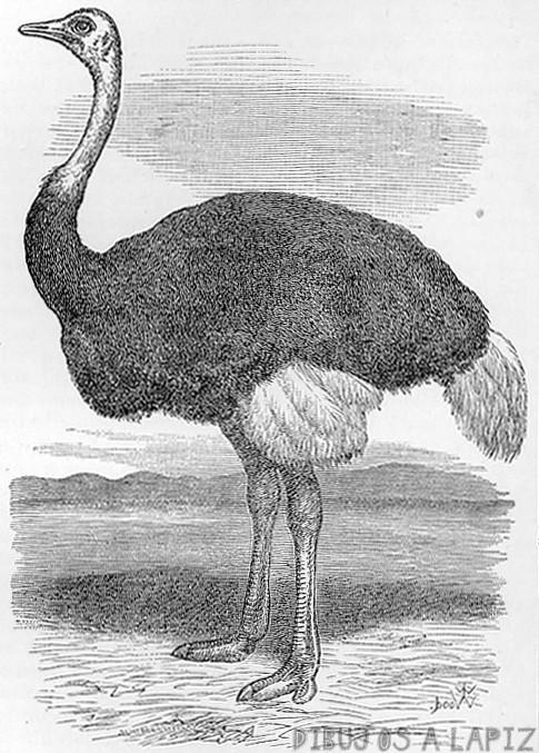 imagenes de botas de avestruz