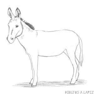 imagenes de burros chistosos