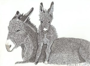 imagenes de burros feos