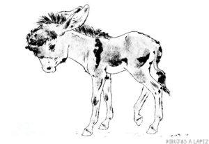 imagenes de burros para dibujar