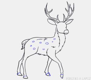 imagenes de ciervos para dibujar