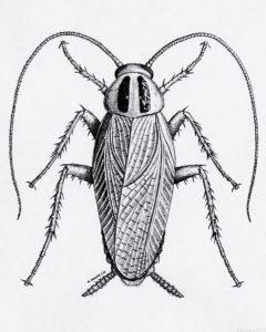 imagenes de cucarachas grandes