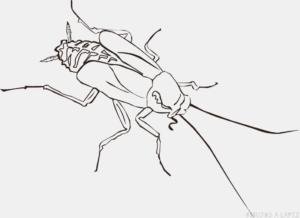 imagenes de cucarachas para colorear