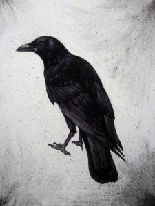 imagenes de cuervos para dibujar