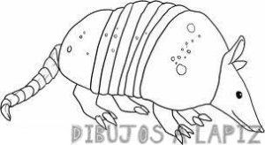 imagenes de el armadillo