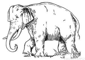 imagenes de elefantes para colorear