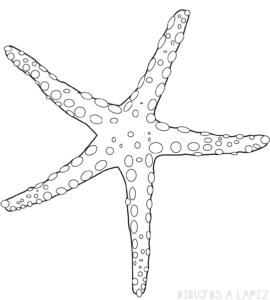imagenes de estrellas de mar para colorear