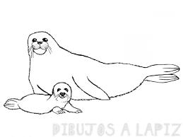 imagenes de focas para dibujar