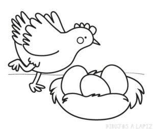 imagenes de gallinas