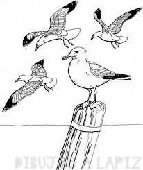 imagenes de gaviotas animadas