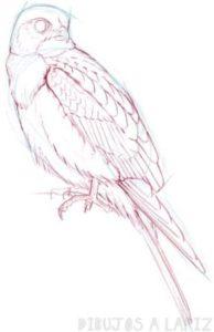 imagenes de halcones con frases
