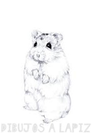 imagenes de hamster para dibujar