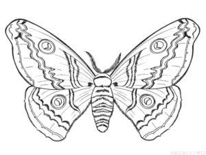 imagenes de insectos para colorear