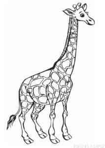 imagenes de jirafas para dibujar