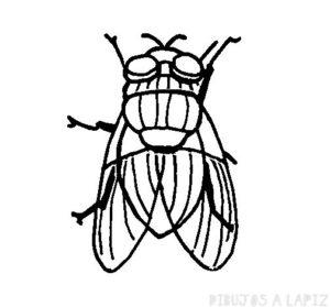 imagenes de la mosca de la fruta
