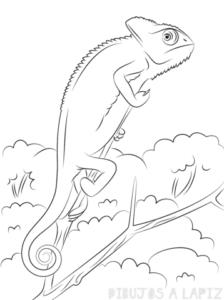 imagenes de lagartijas para dibujar