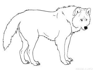 imagenes de lobos para dibujar